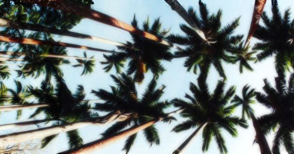 Twitter Header // Palm Trees #3 | Icons | Pinterest | Palm