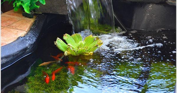 A stunning pond aquarium fabulous patio decorating ideas for Garden aquarium design