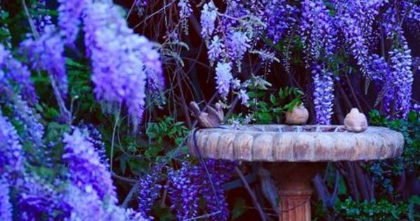 Backyard garden wisteria