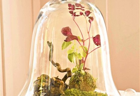 Tovah Martin - Cloche terrarium with moss, roots and green and red