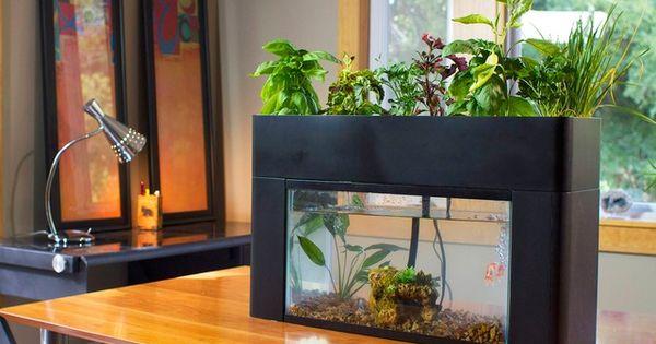 Tabletop Aquaponics Using A 10 Gallon Fish Tank Grow
