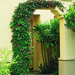 Speedy Vines Garden Design Planting Flowers Garden Inspiration