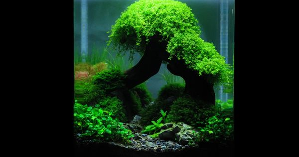 planted nano tanks the art of the planted aquarium die. Black Bedroom Furniture Sets. Home Design Ideas