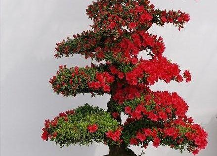 jpb kurume tsutsuji is more than incredible jardin
