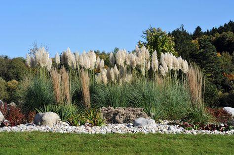 Sichtschutz Im Garten 22 Raffinierte Ideen Anregungen Sichtschutz Garten Bepflanzung Pampasgras Pflanzen