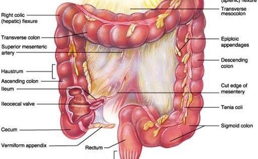 Study of human stomach