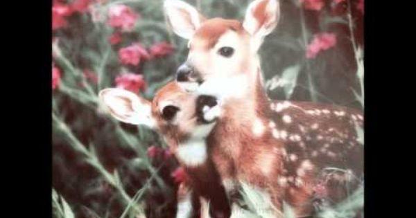 دعاء يوم السبت Fox Animals Youtube