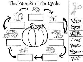 The Pumpkin Life Cycle Pumpkin Life Cycle School Activities Kindergarten Science Pumpkin sequencing worksheet kindergarten
