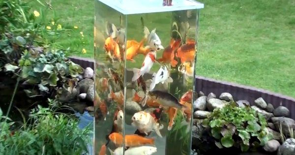 Koi fish pond observation tower - we might build one of these