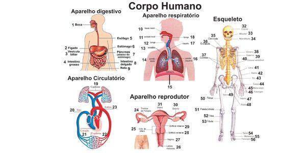 578 600 300 Jpg 600 300 Corpo Humano Partes Do Corpo Humano