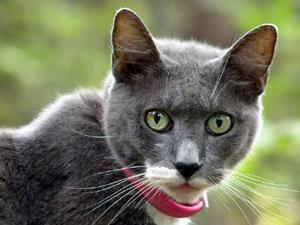 How To Make A Homemade Herbal Flea Collar Lovetoknow Cat Fleas