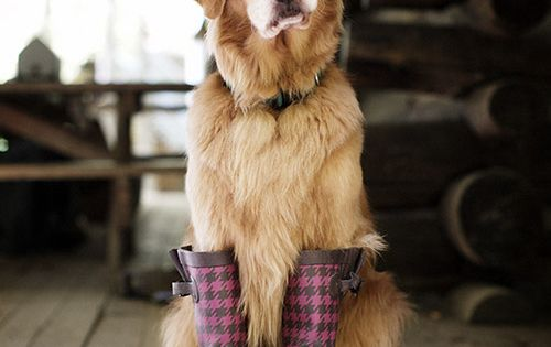 "Let it rain. Im ready. dog love golden retriever goldenretriever"" data-componentType=""MODAL_PIN"