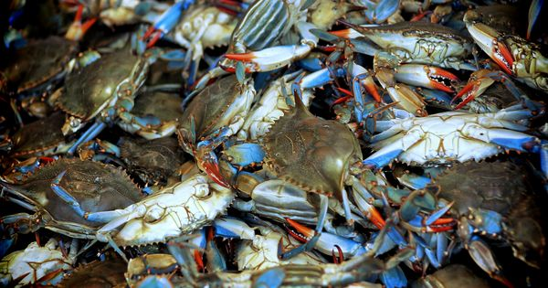 Maryland blue crabs dc waterfront fish market maryland for Fish market maryland