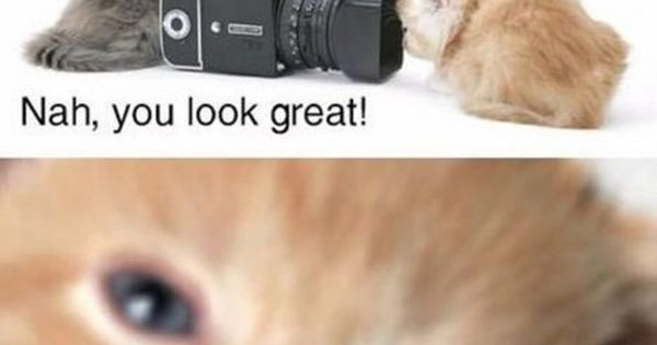 I Love Funny Animal - Sweet Funny Animal Photo of the Day: