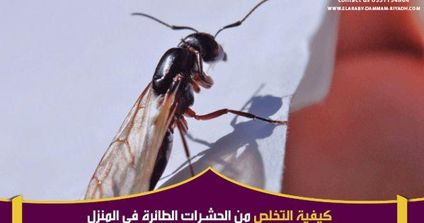 كيفية التخلص من الحشرات الطائرة في المنزل Animals Insects