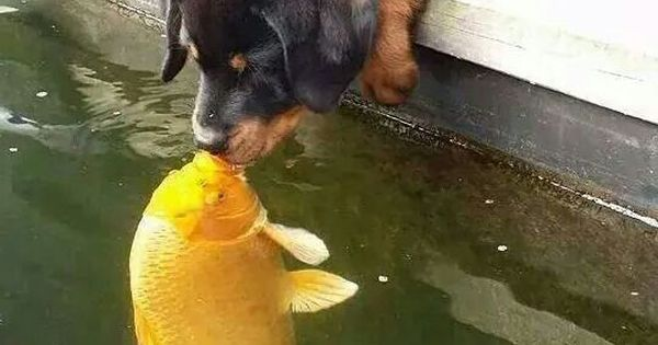 My two most favorite animals.. a dog and a fish kissing! so cute