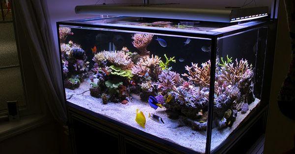 Cool Aquascape Aquarium & Scaping Pinterest