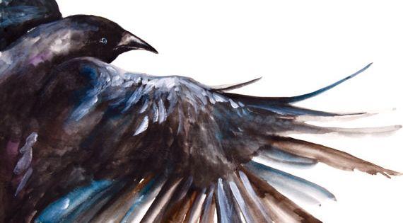 Watercolor Painting Original Painting Crow in Flight by WoodPigeon, $150.00