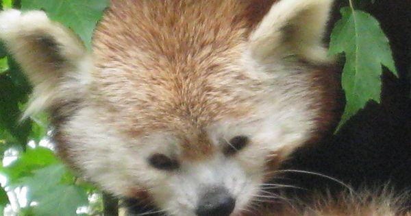 san diego zoo july 4th 2015