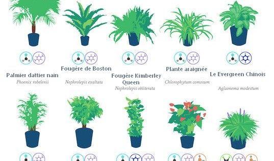 Top 18 des plantes d 39 int rieur d polluantes qui purifient - Les plantes depolluantes purifier l air de la maison ...