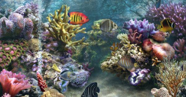 Aquarium Of Niagara Buffalo Ny 2008 Tropical Fish Tanks Coral Reef Ocean Life Art