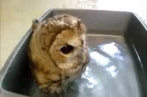 Peabodys Bathtime. SO CUTE!!!!!