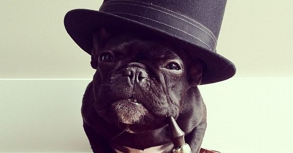 Fancy Bulldog - Im a French bulldog wearing a top hat and