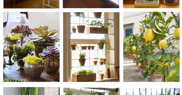 Looking for ideas on where to put your house plants? Love your
