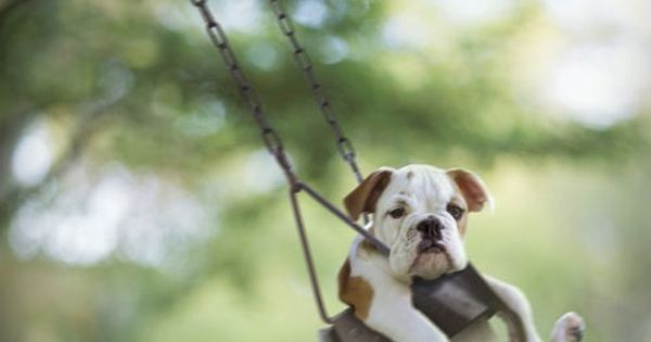Funny animals. so cute