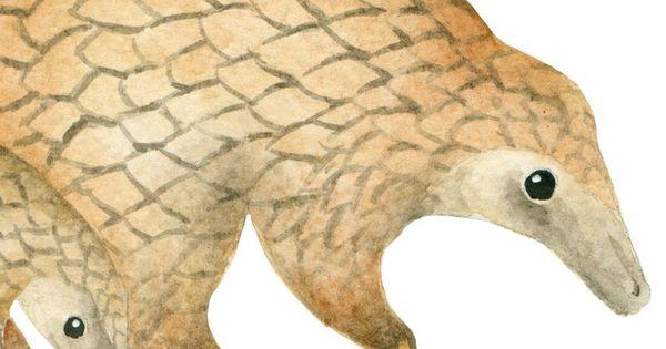 Watercolor Pandolin Clipart Handpainted Pangolin Africa Etsy In 2021 Animal Clipart Pangolin Watercolor Animals