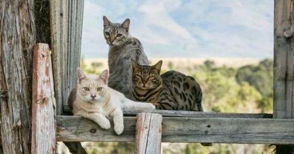 Cat - image