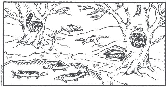 coloring pages animal classification activities - photo#40