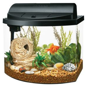 Maybe One Day Petsmart Pet Accessories Pet Supplies