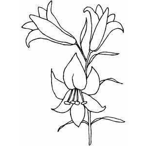 Easter Lily Drawing Easter Lily Coloring Page Flower Drawing