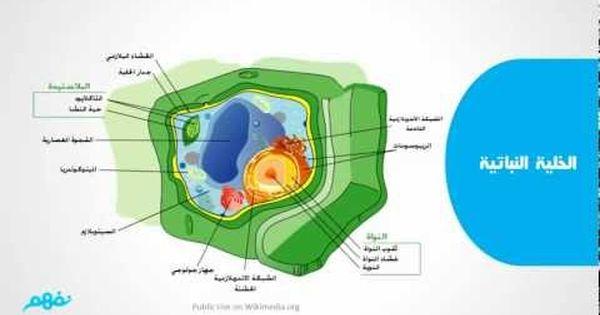الأحياء الصف الأول الثانوي تركيب الخلية النباتية Youtube Art Drawings Drawings Map