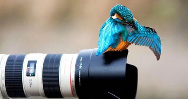 صور Hd خلفيات اتش دى عالية الجوده Isfugl Fugle Billeder