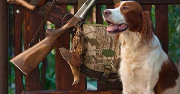 Pin By Bud Young On Hunting Stuff Hunting Dog Names Dog Names Hunting Dogs