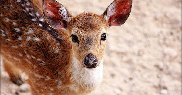 نتيجة بحث الصور عن غزال الريم Animals Kangaroo