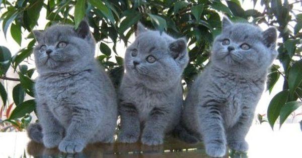 Pin By Jean On Cuteness Cats Cute Cats Kittens Cutest
