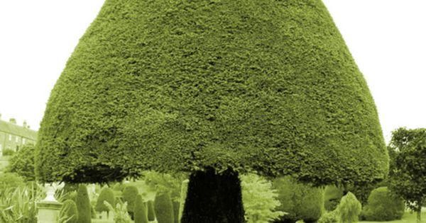 Mushroom topiary ~ Drummond Castle Gardens, garden design ideas garden interior| http://garden-interior-581.blogspot.com