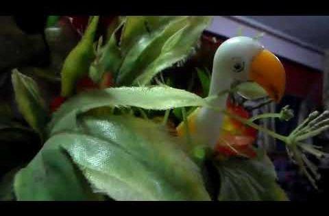 مجموعة رؤى فى المهدى المنتظر 2019 Youtube Animals Parrot Bird