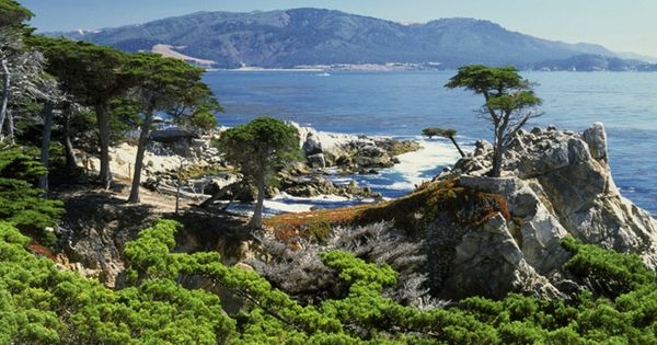 Dog Friendly Places In Monterey Ca