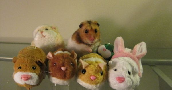 Animals With Stuffed Animals Of Themselves (Guinea Pigs)