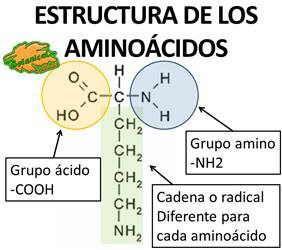 Estructura Quimica De Los Aminoacidos Proteinas Quimica