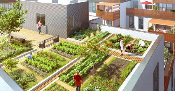 Potager sur le toit d 39 un immeuble de logements dino - Potager sur balcon terrasse ...