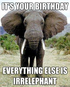 Irrelevant Elephant Memes Quickmeme Birthday Wishes Funny Happy Birthday Funny Funny Happy Birthday Meme