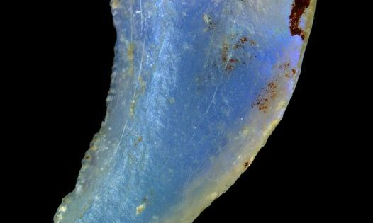 Opalized dinosaur tooth (Australian Museum) ~ also this site is excellent for