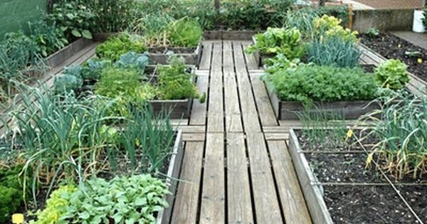 The timber paths between these raised beds make for easy access You