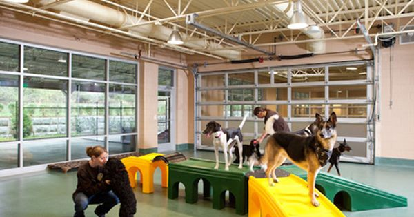Photo Gallery Veterinary Housing Solutions To Show Cats And Dogs