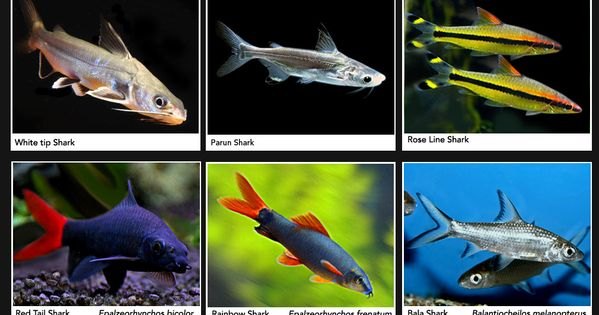 Aquarium shark fish types aquarium shark fish types fish Types of fish aquarium